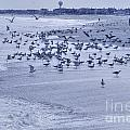 Hdr Seagulls At Play In The Sand by Pictures HDR