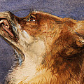 Head Of A Fox by John Frederick Lewis