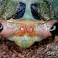 Head Of Cicada by Ted Kinsman