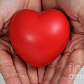 Heart Disease Prevention by Photo Researchers, Inc.