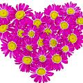 Heart From  Pink Daisies by Aleksandr Volkov