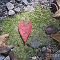 Heart Leaf by Melody Jones