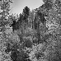 Heart Of The Aspen Forest by Vicki Pelham