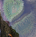 Heart Of The Tide Pool by Mick Anderson