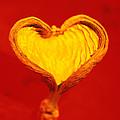 Heart-shaped Nutshell by Carlos Dominguez