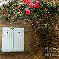 Heart Shutters And Red Roses by Lainie Wrightson