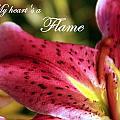 Heart's A Flame by Deborah  Crew-Johnson