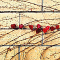Hearts On The Wall by Timothy Bulone