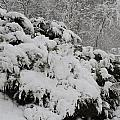 Heavy With Snow by Barbara S Nickerson