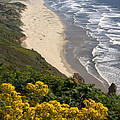 Heceta Beach View by Mick Anderson