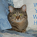 Heidi Cat Miss You by Aimee L Maher ALM GALLERY