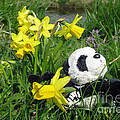 Hello Spring. Ginny From Travelling Pandas Series. by Ausra Huntington nee Paulauskaite