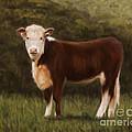 Hereford Heifer by Michelle Wrighton