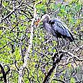 Heron Alone by Don Mann
