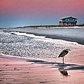 Heron And Beach House by Michael Thomas