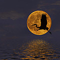 Heron And The Harvest Moon by Amy Jackson