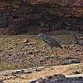 Heron  by Douglas Barnard