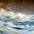 Heron In Centaur Shute by Robert Charity