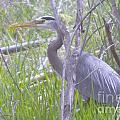 Heron In The Shade  by Jeff Swan