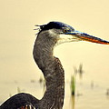 Heron One by Marty Koch