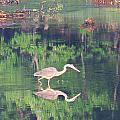 Heron Reflections1 by Martha Abell