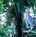Heron by Tap On Photo