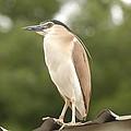 Heron The Great by Peter Bone
