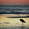 Heron Waiting For The Sunrise by Michael Thomas