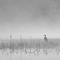 Heron Waits by Peter Bowers