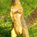 Hey Buddy Have You Seen My Nuts by James Marvin Phelps