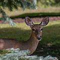 Hi Deer by Guy Whiteley