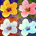 Hibiscus Blooming by Georgeta  Blanaru