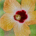 Hibiscus Gold And Red by Deborah Benoit