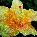 Hibiscus Hiwc by Jim Brage