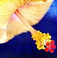 Hibiscus by Judi Bagwell