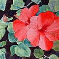 Hibiscus by Laurel Best