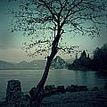 Hidden Bay by Joana Kruse