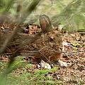 Hidden Hare by Lloyd Alexander