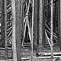 Hidden Shelter by Witt Lacy