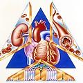 High Blood Pressure, Artwork by John Bavosi