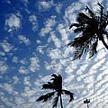 High In The Sky  by Dattaram Gawade