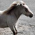 High Spirited Pony by LeeAnn McLaneGoetz McLaneGoetzStudioLLCcom