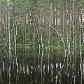 High Waters In A Forest Of Evergreens by Mattias Klum