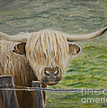 Highland Cow by Boni Arendt