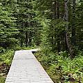 Hiking Trail by John Greim