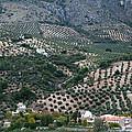 Hills Dales And Vineyards by Lorraine Devon Wilke