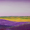 Hills Of Lavender by David Patterson