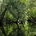 Hillsborough River Reflections by Theresa Willingham