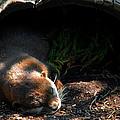 Hit The Otter Snooze by LeeAnn McLaneGoetz McLaneGoetzStudioLLCcom