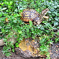 Hitchin A Ride On A Turtle  by Nancy Patterson